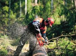 Aide à l'équipement des entreprises d'exploitation forestière et de mobilisation des bois